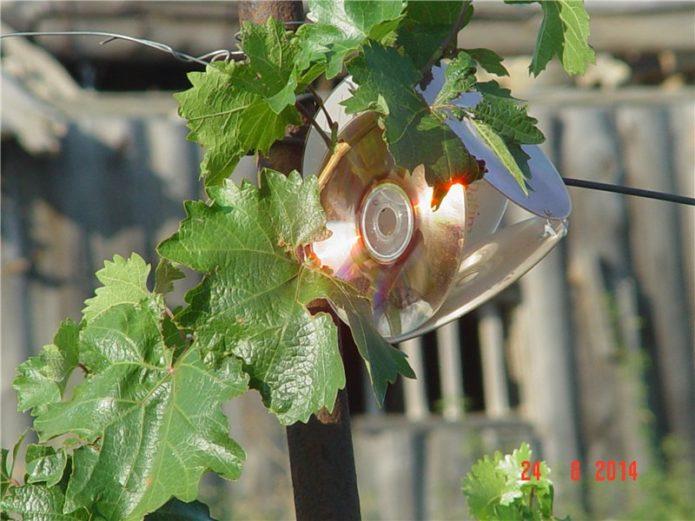 Приспособление для отпугивания птиц от винограда