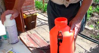 Подготовка раствора из химикатов для опрыскивания винограда