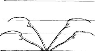 Четырехрукавная веерная безштамбовая формовка