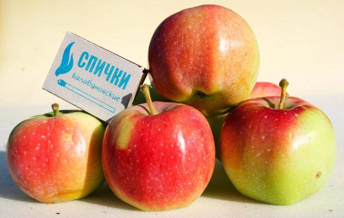 Сорт яблок Память Исаева