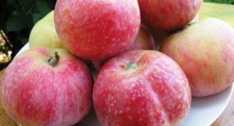 Сорт яблок Конфетное
