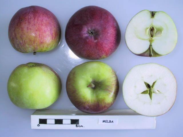 Плоды Мельбы в разрезе