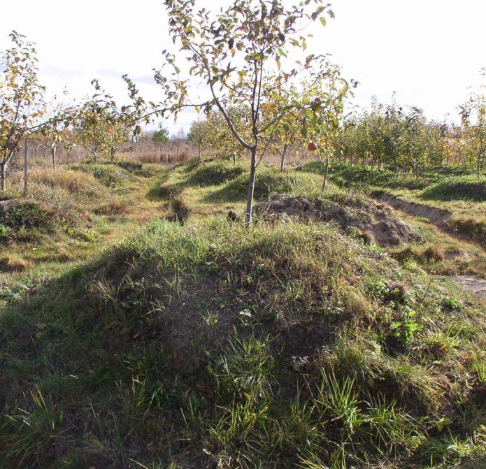 Фруктовые деревья на искусственных холмах