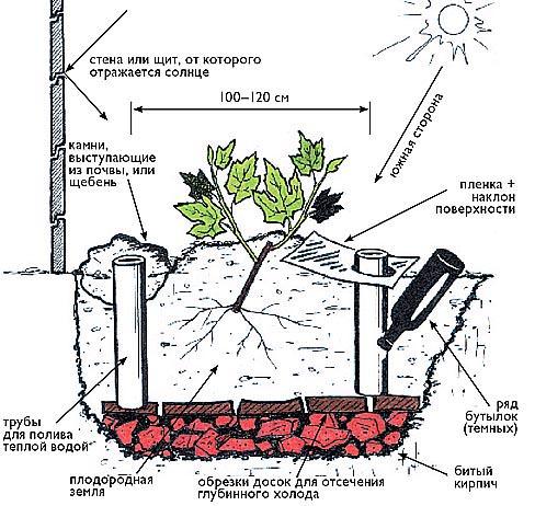 Схема мероприятий, позволяющих повысить температуру для винограда