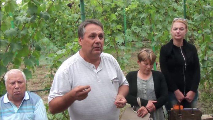 Виноградарь В. В. Загорулько