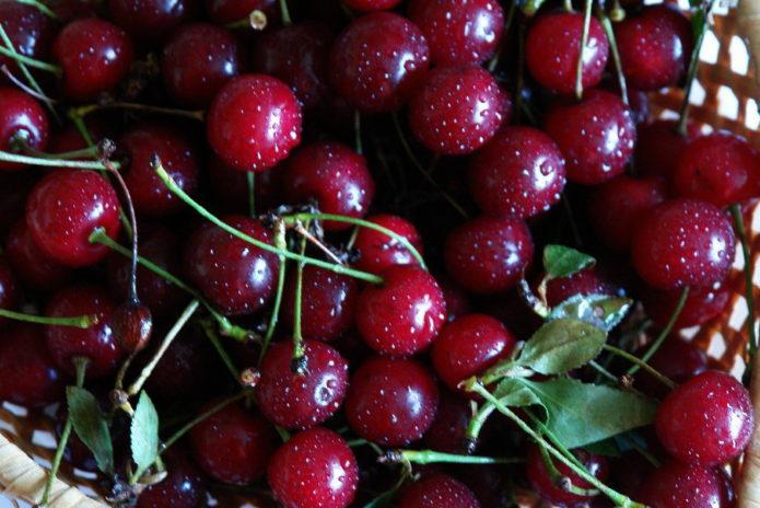 Плоды вишни