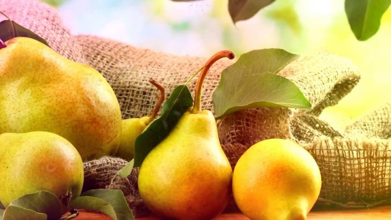 Лучшие самоплодные сорта груш разного срока созревания