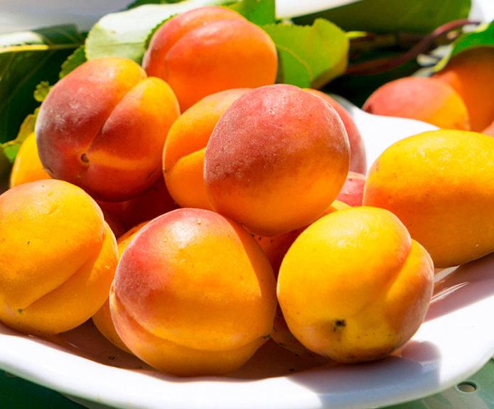 Плоды абрикоса Триумф Северный в тарелке