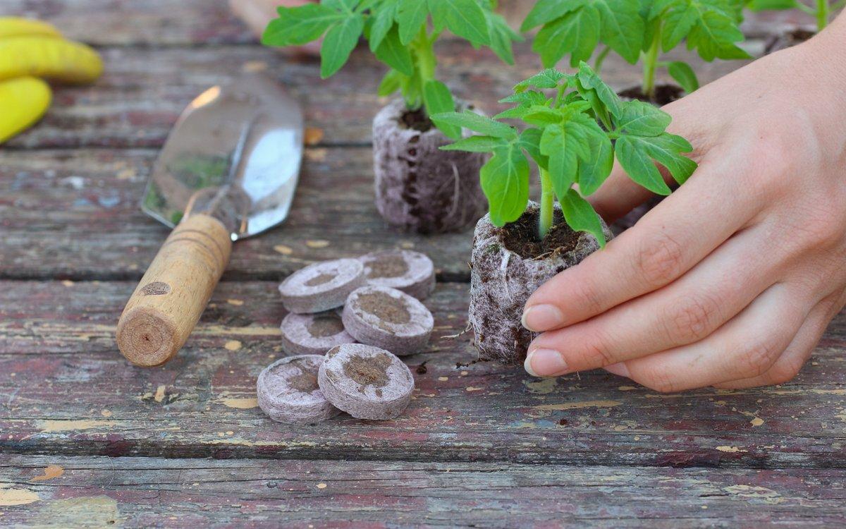Как сажать томаты на рассаду: подготовка семян, выбор тары, способы посева и уход за рассадой