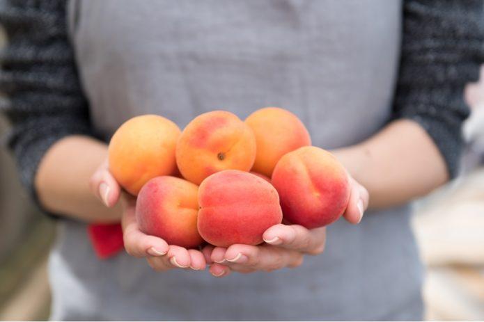 Плоды абрикоса сорта Краснощёкий
