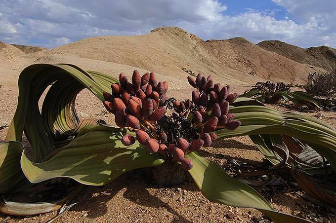 10 самых необычных растений в мире и их фото