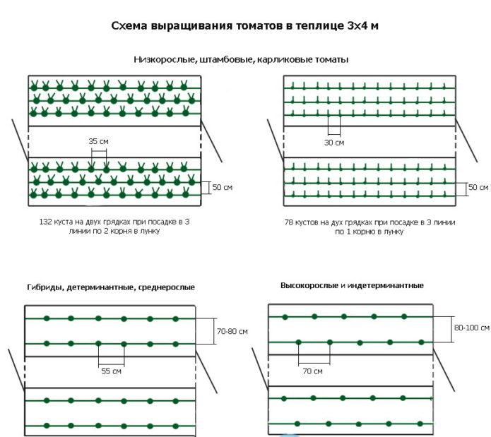 Схема посадки томатов в теплице 3х4