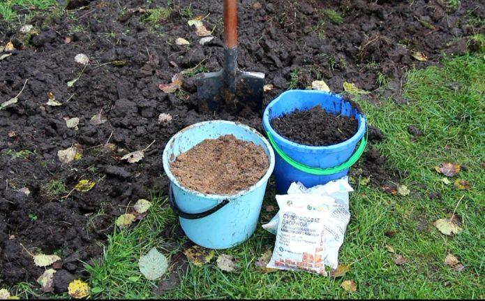 Подготовка участка под луковые посадки