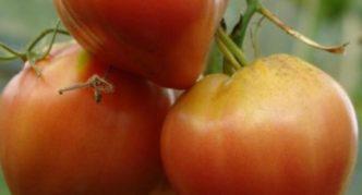 Сорт томата Бычье сердце персиковое