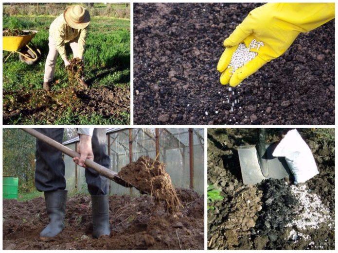 Внесение удобрений в почву на огороде
