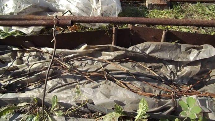 Подготовка лоз к укрытию