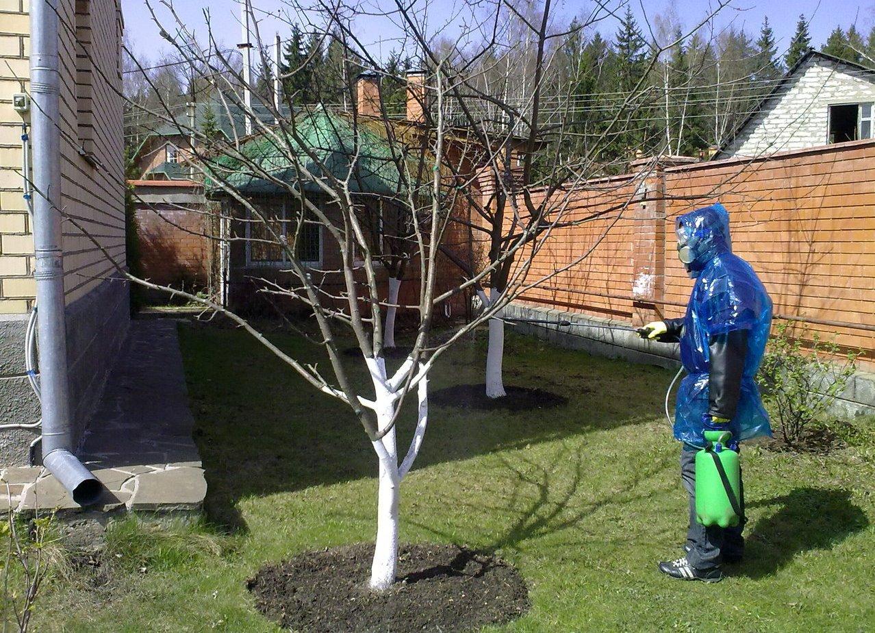 Вишнёвые заботы садовода: лечим от вредителей и болезней, обеспечиваем опыление