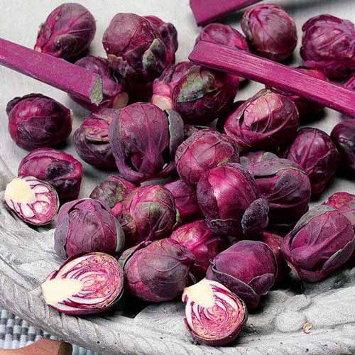 Сорт брюссельской капусты Гранатовый браслет