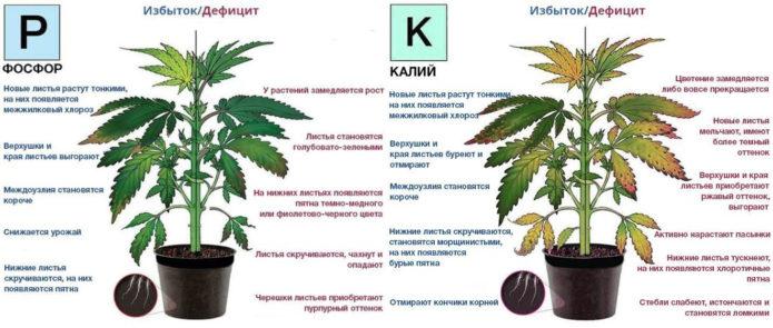 Последствия избытка и недостатка фосфора и калия у растений