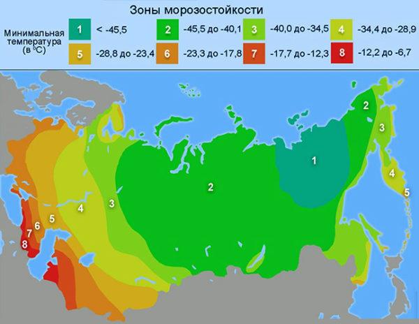 Карта морозостойкости растений в России