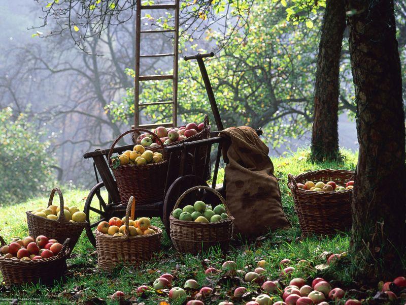 Чем и как подкормить деревья и кустарники осенью. Чем подкармливать осенью плодовые деревья и кустарники