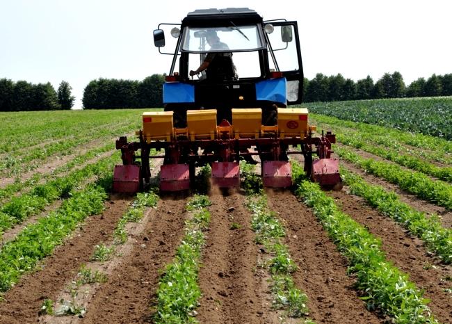 Обработка картофельного поля промышленным культиватором