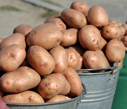 Вёдра с картошкой