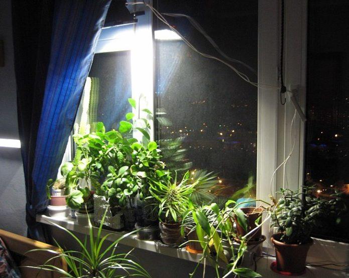 Использование искусственного освещения для выращивания растений