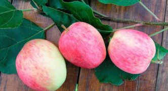 Яблоки сорта Аркадик