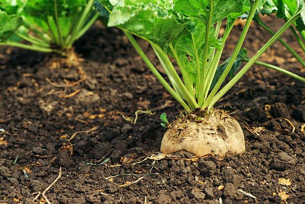 Какие культуры сажают под зиму список овощей