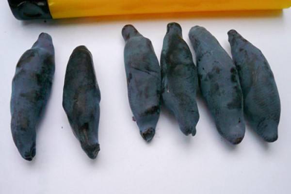 Ягоды жимолости Голубое веретено