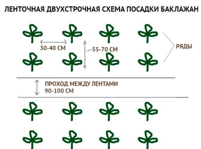 Схема посадки баклажан Клоринда F1