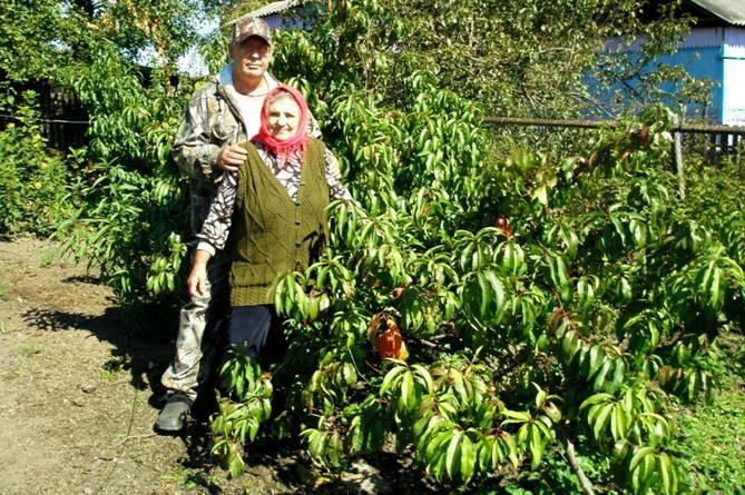 Персики в Сибири