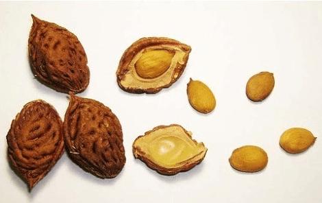 Ядрышки и косточки персика