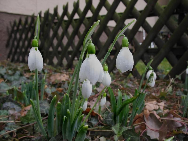 Лунный календарь садовода и огородника на март 2019