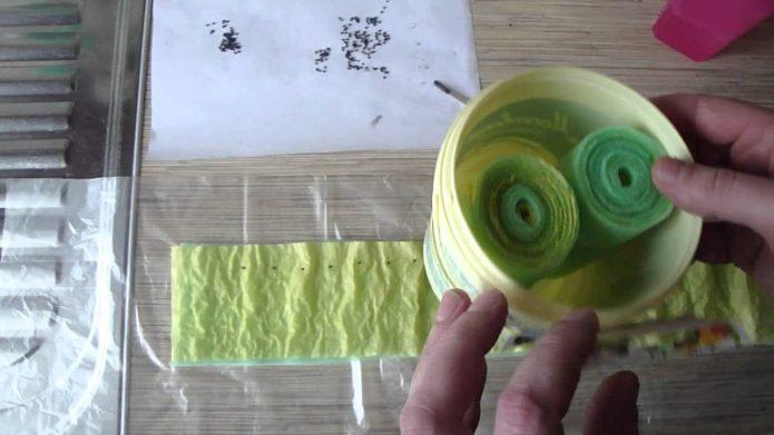 Посев семян в улитку с туалетной бумагой