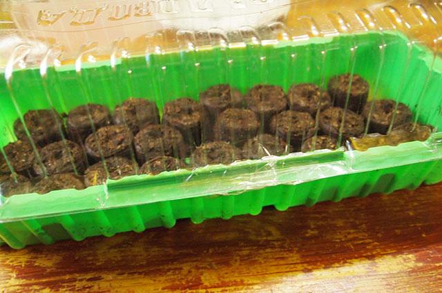 Торфяные таблетки в контейнере