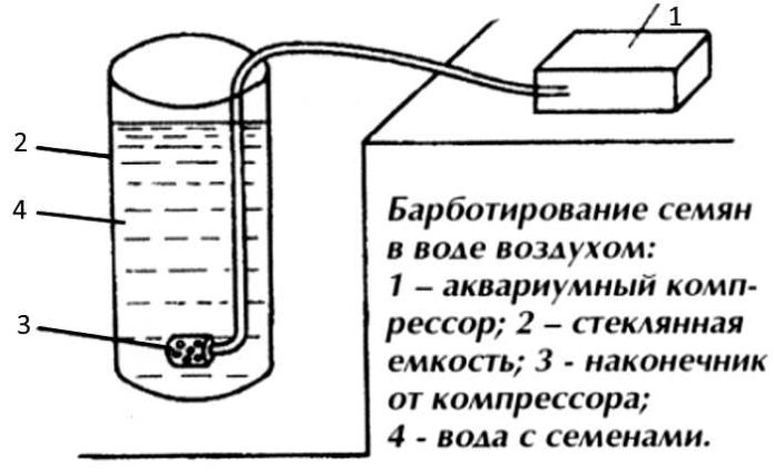 Схема барботирования семян