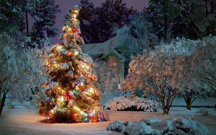 Наряженная елка в зимнем саду