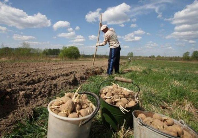 Запрет выращивания картофеля Россия