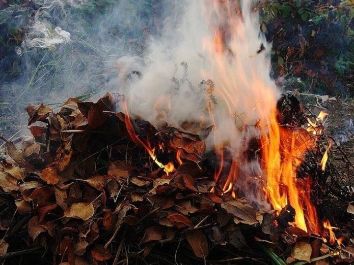 Сжигание прошлогодней листвы