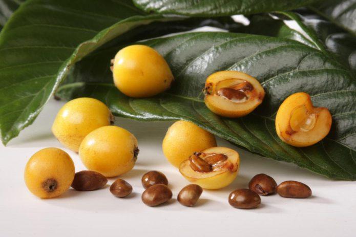 Плоды мушмулы фото