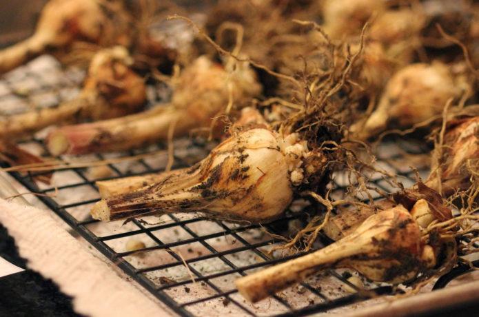 Подсушивание лукович бабианы