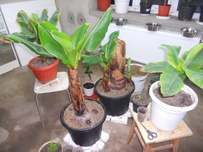 Признаки хлороза на растении