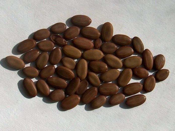Семена альбиции