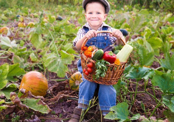 Ребенок держит урожай с грядки в корзине