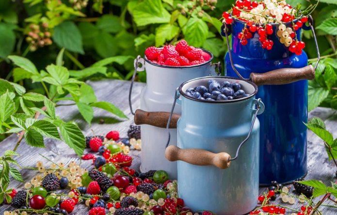 Урожай ягод смородины, голубики и малины в бидончиках