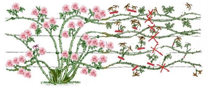 Как обрезать розы после цветения летом и нужно ли это делать вообще