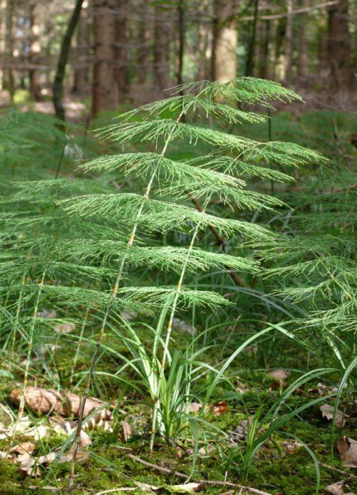 Лесной вид