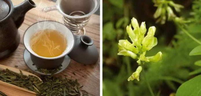 Чай из травы астрагала